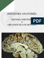 Imagenes SNC y Organos de Los Sentidos