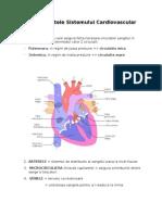 Componentele Sistemului Cardiovascular