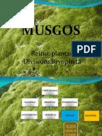 Diapos de Musgos y Liquenes Ade - Copia