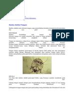 Infeksi Parasit