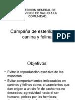 Campaña de esterilización canina y felina (objetivos del programa)