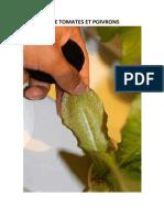 Hydroponie Tomates Et Poivrons