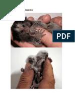 Macaco Da Amazonia