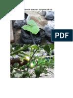 Test de Concombre Et Tomates Sur Peau de Riz