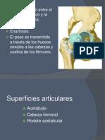 Articulacion de Cadera