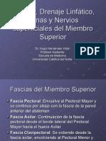 Fascias y Nervios Superficiales Del Miembro Superior