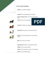 Tipología del toro