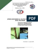 Afidos Asociados a Citricos de EL SALVADOR