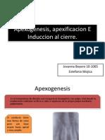 Apexogenesis, Apexificacion E Induccion Al Cierre