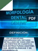 Consolidado de Morfologia Dental