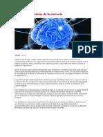 Encuentran proteína de la memoria