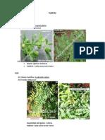 Plantas Manual