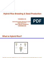 Hybrid Rice Breeding & Seed Production