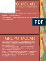 Grupo Molar Modificad