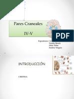 1.Pares Craneales IV y V