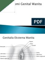 Anatomi Genital Wanita
