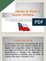 Conociendo La Flora y Fauna Chilena