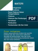 Fotomorfogenesis Dan Fitokrom