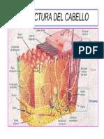 Estructura Del Cabello