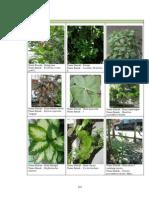 16. Lampiran IV Flora D-H