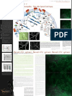 Dendritic Spines Medical Print
