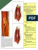 Lp7 Fosa Cubitala Canalul Carpian Tabachera Anatomica