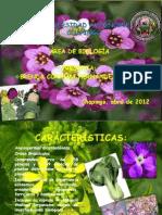 brassicaceae.pdf