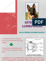 Estenosis en Caninos