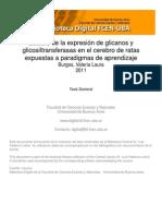 ESTUDIO DE LA EXPRESIÓN DE GLICANOS
