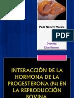Paula Navarro Macana P4