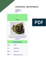 Cannabis - Psicotrópico