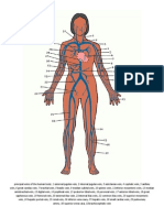 Arteri Vena Chart