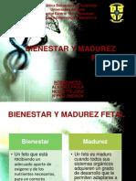 Montaje médico (1)