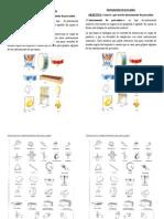 Instrumentos de percusión 1° y 2°