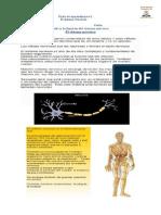 Ficha Sistema Nervioso