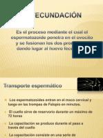 59656925-fecundacion1
