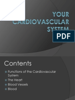 your cardiovascular system health