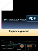 2-FosforilacionOxidativa