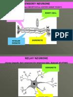slide modul sains