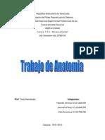 Anatomia-trabajo.docx