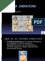 Sistema+Endocrino