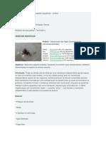 Condrachatus - Especxie Algas Vermelhas de Relatorio Aula Pratica (de Biologia de Vegetais Aquaticos )