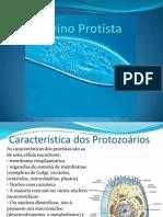 Protista s