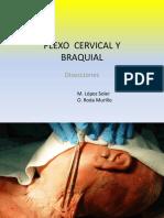 001 Plexo Cervical Braquial Diseccion