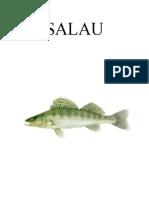 SALAU