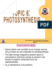 6. Photosynthesis