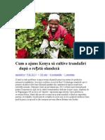 Cum a ajuns Kenya să cultive trandafiri după o rețetă olandeză