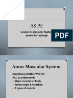 As PE Lesson 5 Muscles