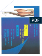Muschii Gambei Si Piciorului