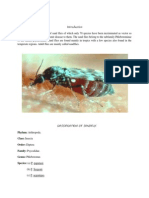 Classification of Sandfly